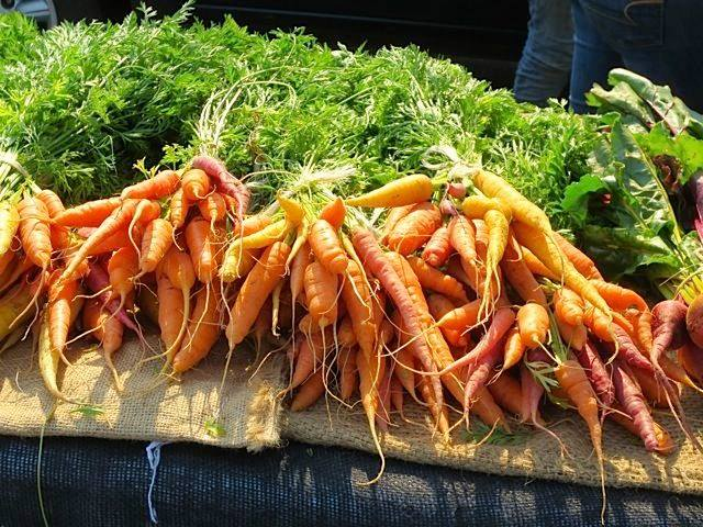 carrots in a bunch